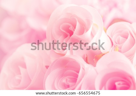 Pink color of roses in soft style for background
