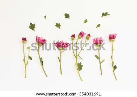 Pink colored flowers isolated on white stock photo royalty free pink colored flowers isolated on white background mightylinksfo