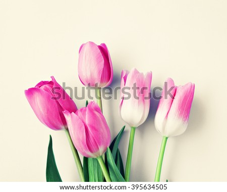 Pink colorful tulips over a sepia beige background in a flat lay composition with copy space  - stock photo