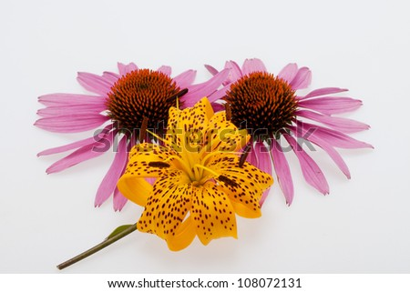 Pink coneflower and yellow lily - stock photo
