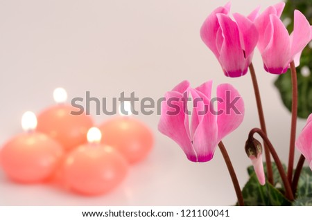 Pink cyclamen flowers and candle blur on gray - stock photo