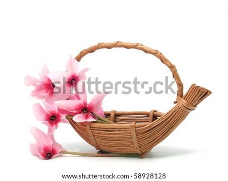 Pink cyclamen in the basket - stock photo
