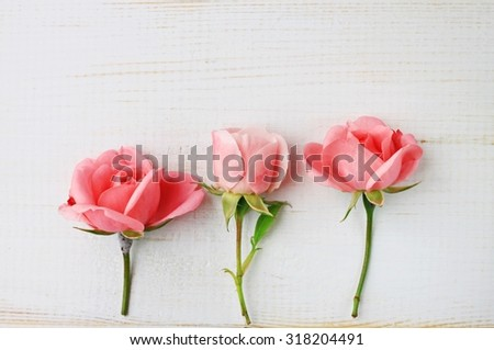 Pink delicate garden roses white wooden cottage background empty space, home romantic decor, soft focus - stock photo