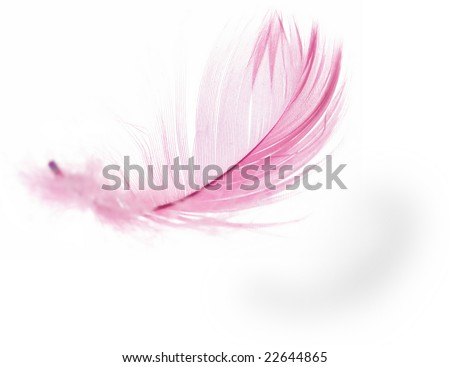 Pink Feather in soft-focus view. Close-Up. With white background - Isolated. - stock photo