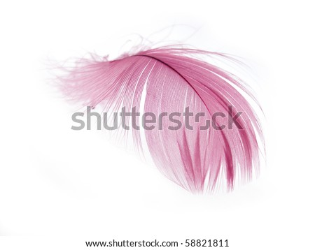 Pink Feather in soft focus view. Close-Up. With white background - Isolated. - stock photo