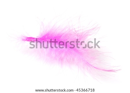 pink feather isolated