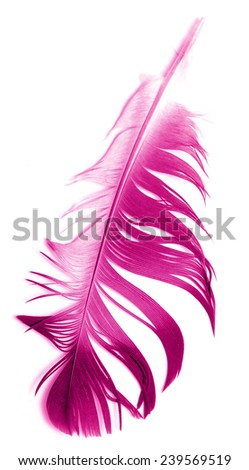 pink feather on white background - stock photo