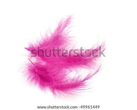 Pink feather over white background