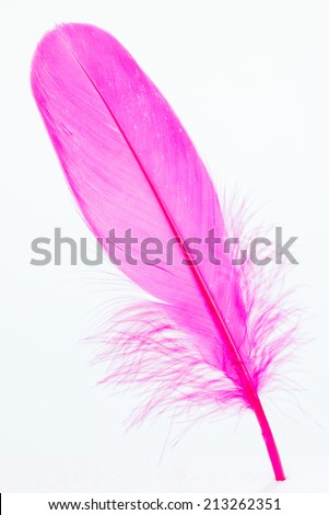 Pink feather stands on a white foam board close up  - stock photo