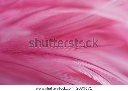 Pink feathers, close-up - stock photo