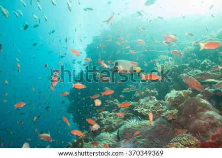 Pink fish school above a healthy sunny coral reef - stock photo