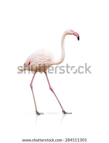 pink flamingo isolated on white - stock photo