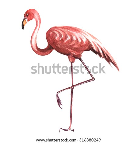pink flamingo isolated, watercolor painting on white background