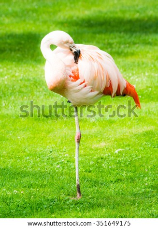 Pink flamingo standing in the grass on one leg - stock photo