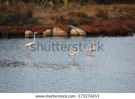 Pink flamingos - stock photo