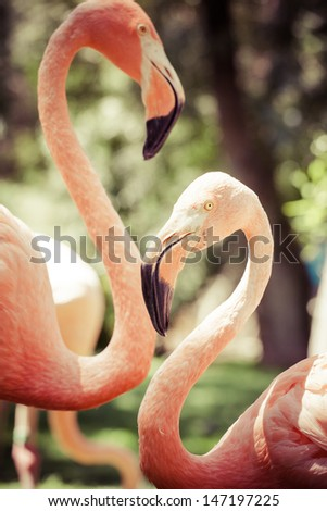 Pink flamingos against green background - stock photo
