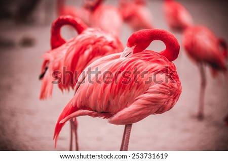Pink flamingos crowd standing against green background - stock photo