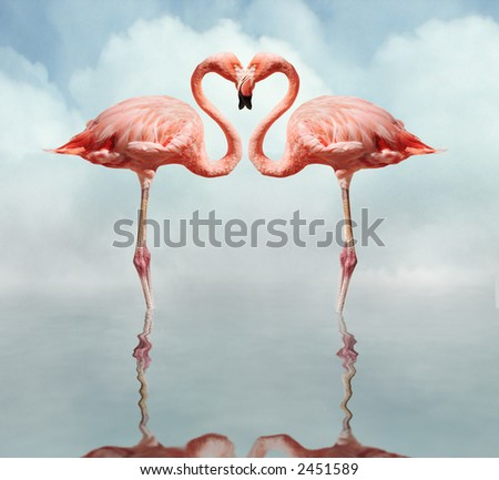 pink flamingos making a heart shape in reflection pond - stock photo