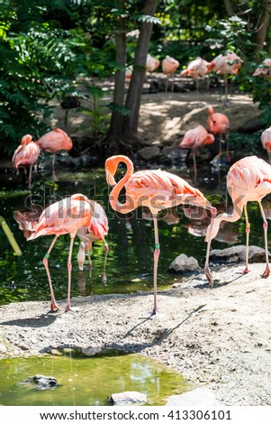 Pink Flamingos near a green pond