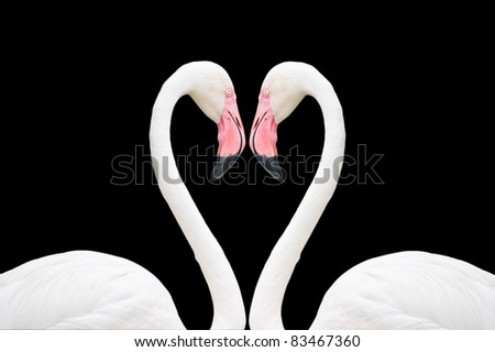 pink flamingos on a black background - stock photo