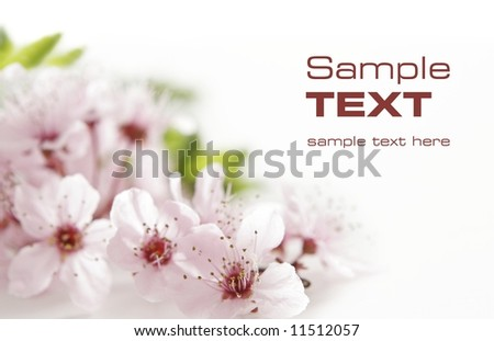 pink flower - stock photo