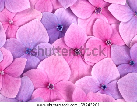 Pink flower background close up. Romantic and love pattern - stock photo