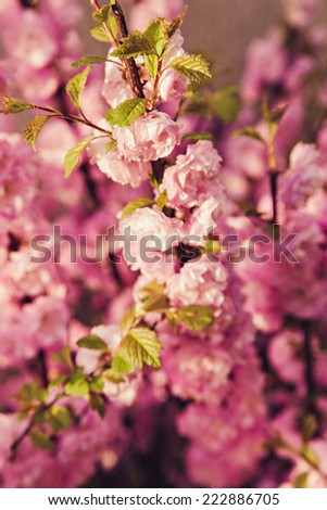 Pink flower blooming on a tree branch - stock photo