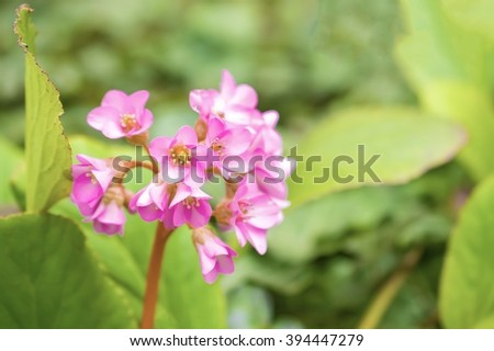 Pink flower blossom on green background - stock photo