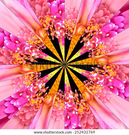 Pink Flower Center Symmetric Collage Made of Collection of Various Wildflowers. Pieces are Seamlessly Divided into 24 Symmetric pieces. - stock photo