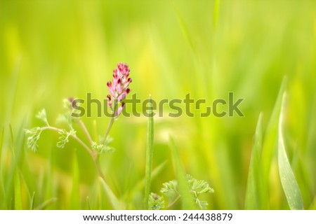 Pink flower close-up. Selective focus (shallow depth of field).  - stock photo