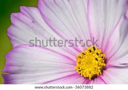 Pink flower closeup - stock photo