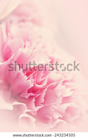 Pink flower for romantic background in soft background concept - stock photo