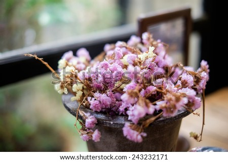 Pink flower in a pot - stock photo