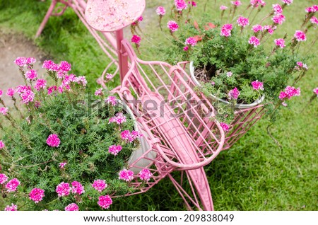 Pink flower in the garden or nature park Thailand - stock photo