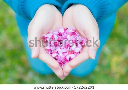 Pink flower in women's hands - stock photo