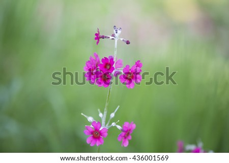 Pink Flower isolated against green - stock photo