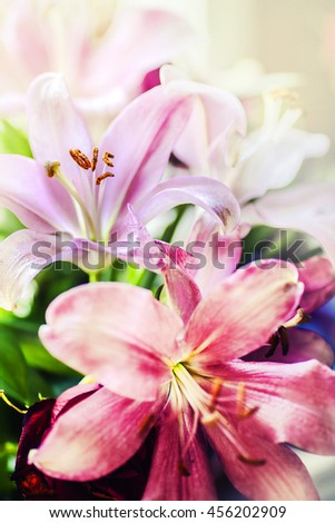 pink flower on blur background, Beautiful pink lily in the sunshine, abstract nature background with pink blossom - stock photo