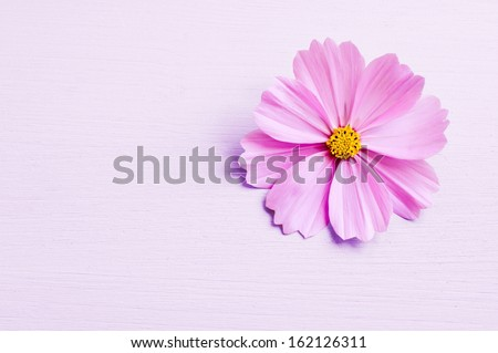 pink flower on pink background - stock photo