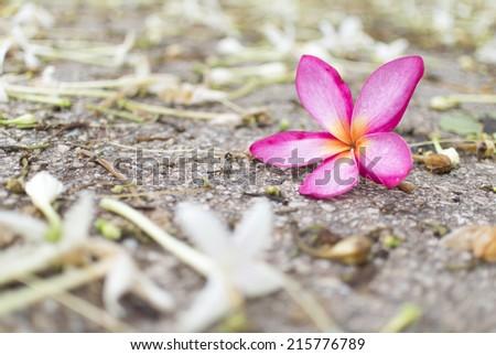 Pink flower on the garden - stock photo