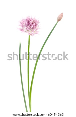 Pink flower on white - stock photo