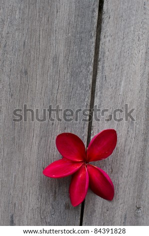 pink flower on wood - stock photo