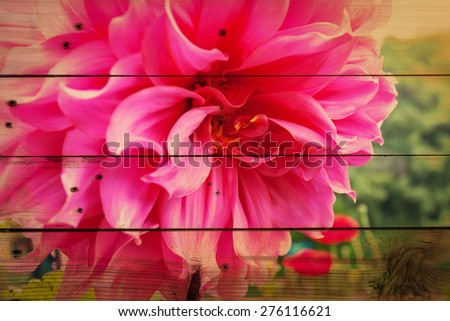 pink flower on wooden texture,grunge style .  - stock photo