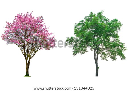 Pink flower tree isolated on white background - stock photo
