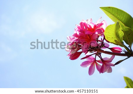 pink flower with gree leaf on tree on blue sky background,select focus with shallow depth of field:ideal use for background - stock photo