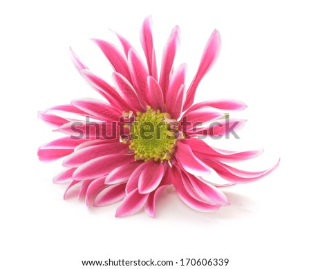pink flower with long thin petals & a yellow center.