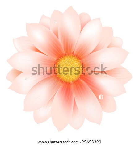 Pink Flower With Water Drop - stock photo