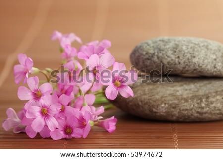 Pink flower with zen stone,Closeup. - stock photo