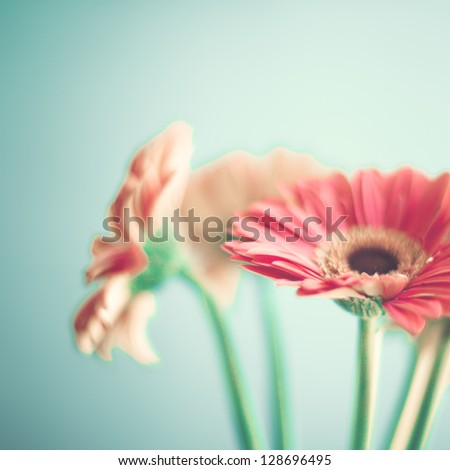 Pink Flowers - stock photo