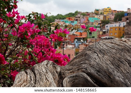 pink flowers and Guanajuato in Mexico- town with colorful houses - stock photo