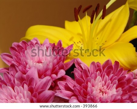 Pink flowers and Yellow Lily